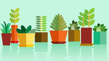 Plant patents at the EPO - is an amended EU Biotech Directive (98/44/EC) on the horizon?